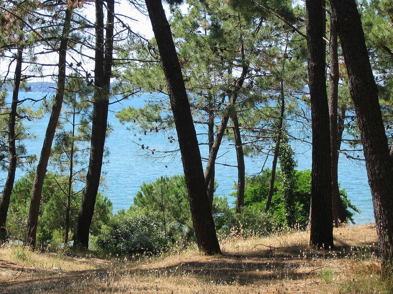 Aux arbres citoyens ! Aidez les forestiers à défendre vos forêts 1280px-Arcachon_2