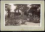 Arizona Garden, Hotel del Monte Monterey, Cal. C.R. Savage, Photo..jpg