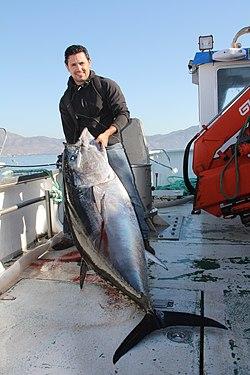 makrellstørje oslofjorden