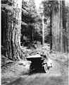 Automobile on a forest road near Mount Rainier (CURTIS 98).jpeg