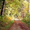 Autumn path ^1 - Flickr - Stiller Beobachter.jpg