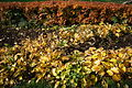 Autumn yellow leaves Tverskoy Boulevard Moscow.JPG