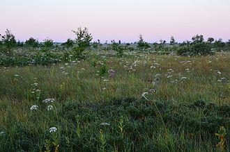 Fen - Outer Avaste Fen, western Estonia