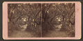 Avenue in Bonaventure, near Savannah, Georgia, from Robert N. Dennis collection of stereoscopic views 2.png