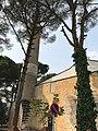 Aydınoğlu Mehmet Bey Mosque (9).jpg