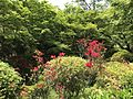 Azalea flowers in Mifuneyama Garden 3.jpg