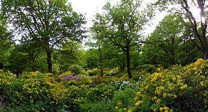 Slottsskogen - The Azalea valley during blossom