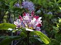 BLM Botany 10 (6871303703).jpg