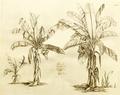 Bala 1-12 Rheede 1678.png