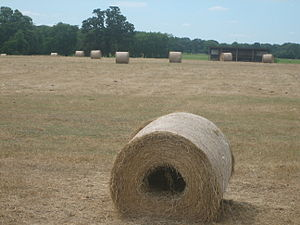 Madison County, Texas - Bales of rolled hay off Texas State Highway 21 east of Madisonville