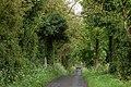 Ballyhone Road, Magheramorne (1) - geograph.org.uk - 173219.jpg