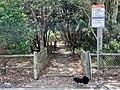 Beach access pin Casuarina, New South Wales 03.jpg