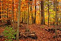 120px-Beartown_Woods_Natural_Area_%282%2