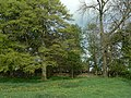 Behind the trees - geograph.org.uk - 1304943.jpg
