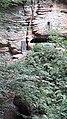 Berdorf beau lis de notre vallee 1.jpg