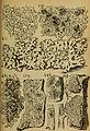Bericht des Naturwissenschaftlichen Vereins für Schwaben und Neuburg (a.V.) in Augsburg (1906) (20357333422).jpg