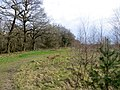 Beside Moulsham Thrift Wood - March 2013 - panoramio.jpg