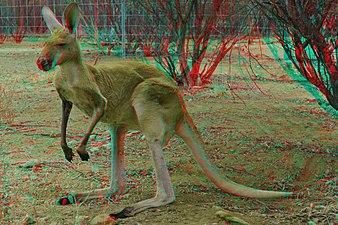 Big Red Kangaroo 3D.jpg