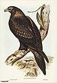 Bird illustration by Elizabeth Gould for Birds of Australia, digitally enhanced from rawpixel's own facsimile book1.jpg
