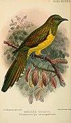 Bird notes (1902) (14568869087).jpg