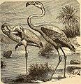Birds and their ways; (1883) (14748621531).jpg