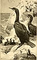 Birds of California; an introduction to more than three hundred common birds of the state and adjacent islands, with a supplementary list of rare migrants, accidental visitants, and hypothetical (14569118977).jpg