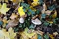 Blätter mit Pilzen auf dem Waldboden.jpg