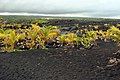 Black sand beach - panoramio.jpg