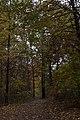 Blendon Woods-Sugarbush Trail in Fall 1.jpg