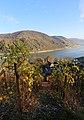 Blick von den Weinbergen in Höhe Burg Stahleck (Bacharach).jpg