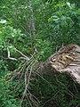 Bloomfield Provincial Park IMG 8280 (1848238239).jpg