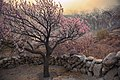 Blossom at its peak in the village of Passu.jpg