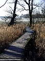 Boardwalk by Castle Loch - geograph.org.uk - 115195.jpg