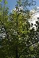 BotGardenFomin DSC 0214-1.jpg