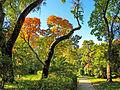 Botanička bašta Jevremovac, Beograd - jesenje boje, svetlost i senke 06.jpg