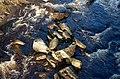 Boulders in the Black Water - geograph.org.uk - 1575168.jpg