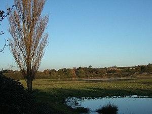 RSPB Bowling Green Marsh - Bowling Green Marsh, Topsham; RSPB reserve.