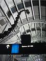 Brachiosaurus altithorax, United Airlines terminal, OHare Airport (6475405135).jpg