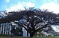 Brasilia DF Brasil - Palácio da Justiça DF - panoramio.jpg