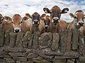 British Isles rural and coastal (5765420338).jpg