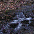 Brook somewhere in north Georgia.jpg
