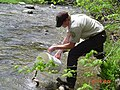 Brook trout stocking (6962618305).jpg