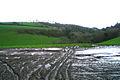 Brownberry Wood - geograph.org.uk - 303345.jpg