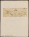 Brycon opalinus - 1700-1880 - Print - Iconographia Zoologica - Special Collections University of Amsterdam - UBA01 IZ14700057.tif