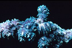 meaning of bryozoa