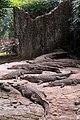 Buaya muara Crocodylus porosus Bandung Zoo 1.jpg