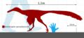 Buitreraptor gonzalezorum size chart.png