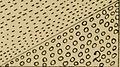 Bulletin - New York State Museum (1905) (14759242806).jpg