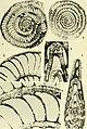 Bulletins of American paleontology (1960) (19882240903).jpg