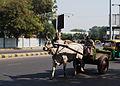 Bullock Cart in Ahmedabad.jpg